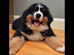 <b>Funny</b> And Cute <b>Mountain</b> Dog Videos Compilation - <b>Funny</b> Dogs ...