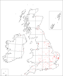 Alyssum alyssoides | Online Atlas of the British and Irish Flora
