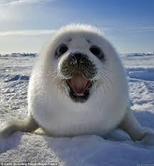 Over Excited Seal memes | quickmeme via Relatably.com