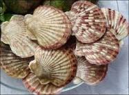 Cung cấp hải sản tươi sống giá rẻ