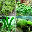 Images & Illustrations of chlorophyte