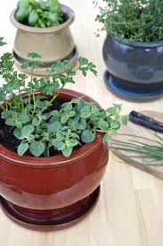 Kitchen Windowsill Herb Garden Tips For A Small Space Kitchen Herb Garden Kitchn
