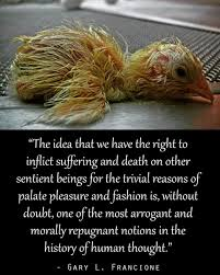 veganism search essay the crowland chicks and our conventional wisdom about animals bit ly 2odpdh4 govegan veganism animalrightspic com rrloeixxx5