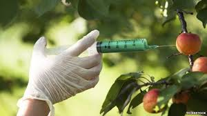 Is opposition to genetically modified food irrational    BBC News