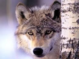 """Résultat de recherche d'images pour """"émoticones gratuits animal sauvage"""""""