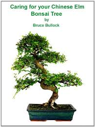 caring for your chinese elm bonsai tree by bullock bruce chinese elm bonsai tree
