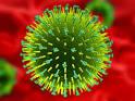 Images & Illustrations of arbovirus