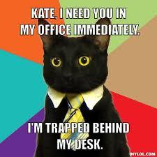 Business Cat Meme Generator - DIY LOL via Relatably.com