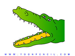 Afbeeldingsresultaat voor alligator tekening