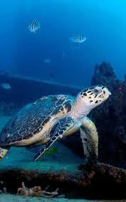 <b>Fort</b> Lauderdale Scuba Diving, Snorkeling & Free Diving