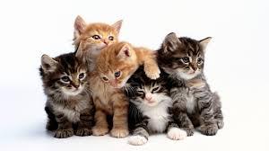 Мачки Images?q=tbn:ANd9GcRVVvsGpb_KPL9uhycOOtLUADAaWB1YLWCA6cWiACKZPco77N1g