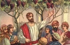 Kết quả hình ảnh cho chúa là cây nho