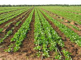 الزراعة في الأراضي الجيرية