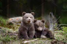 <b>Bears</b> (<b>Медведи</b>): лучшие изображения (596) | Животные, Дикие ...