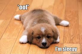 oof* I'm sleepy - tired puppy - quickmeme via Relatably.com