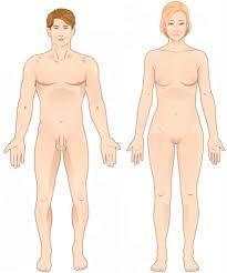 <b>Anatomical</b> terminology - Wikipedia