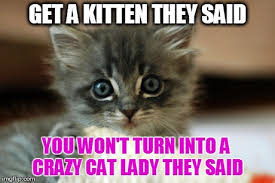 11 cute kitten memes will instantly brighten your day - Page 4 of ... via Relatably.com