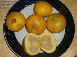 Resultado de imagen para chamba fruta
