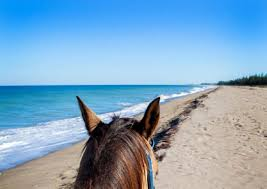 the other bounty on florida s treasure coast toronto star a horseback ride on a protected beach on hutchinson island provides the opportunity to spot sea