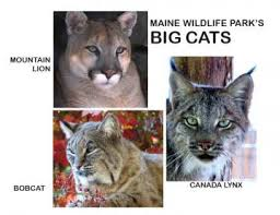 Image result for maine wildlife park