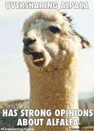 Alpaca Humor on Pinterest | Alpacas, Alpaca Funny and Llamas via Relatably.com