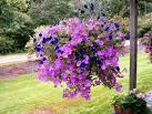Цветы для сада многолетники фото и названия