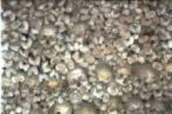 Resultado de imagem para imagens do vale de ossos secos