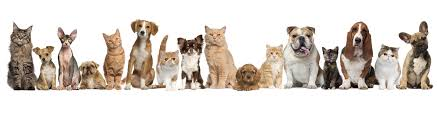Image result for senior animals month