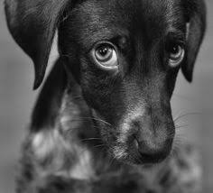 Image result for Black dog with white and yellow patch above eyes images