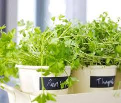 Risultati immagini per aromatic herbs