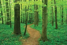 Image result for health path