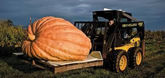 Image result for giant pumpkin weight