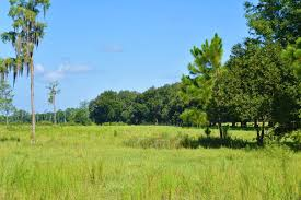 alachua county fl land for listings page of  alachua county fl land for 936 listings page 1 of 38 land and farm
