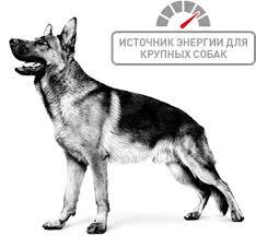 """<b>Royal Canin</b>"" Maxi <b>Adult</b> 3кг <b>Роял Канин</b> Макси Эдалт"