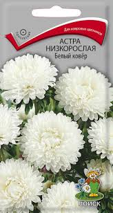 <b>Семена Астра</b> низкорослая <b>Белый ковёр</b> 0,2гр.