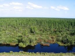 Pocosin Lakes National Wildlife Refuge