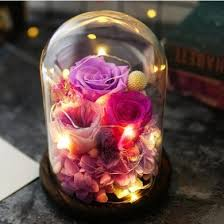 Glass Dome <b>Roses</b> / <b>String</b> Fairy Light Gift