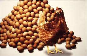 Image result for egg production