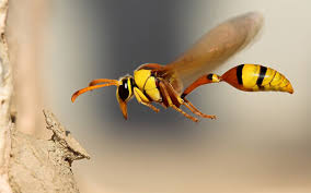 Böcek İlaçlama Şirketleri Okmeydanı