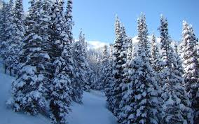 Image result for snow tree