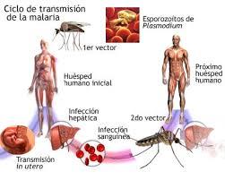 Resultado de imagem para Dia Mundial da malária