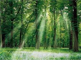 What is <b>natural wood</b> - Advantages, disadvantages of <b>natural wood</b> ...