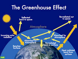 apes carbon cycle and the greenhouse effect ap environmental picture