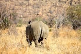 as you like it essay   things bitches say   bitchessayin  twitter    pilanesberg national park safari