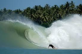 Is The Fish Surfing's Most Misunderstood Design? - Stab Magazine