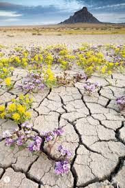 """Résultat de recherche d'images pour """"fleur au milieu du desert"""""""