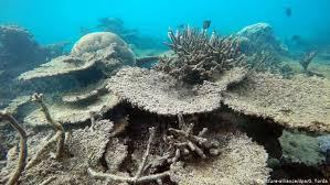 <b>Coral</b> reefs rapidly die from marine heat <b>waves</b> — study   News   DW ...