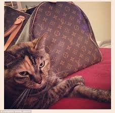 Rich Cats of Instagram: Meet the moggies who are living in the lap ... via Relatably.com