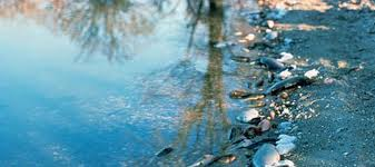 Resultado de imagen para fotos de agua