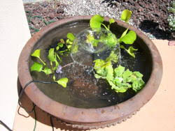 diy patio pond: